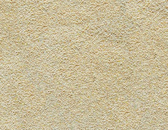 White Proso Millet Archives - Song of America Birdseed