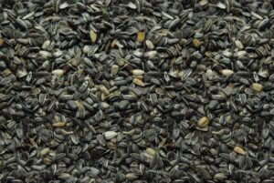 415 Stripe Sunflower Seed