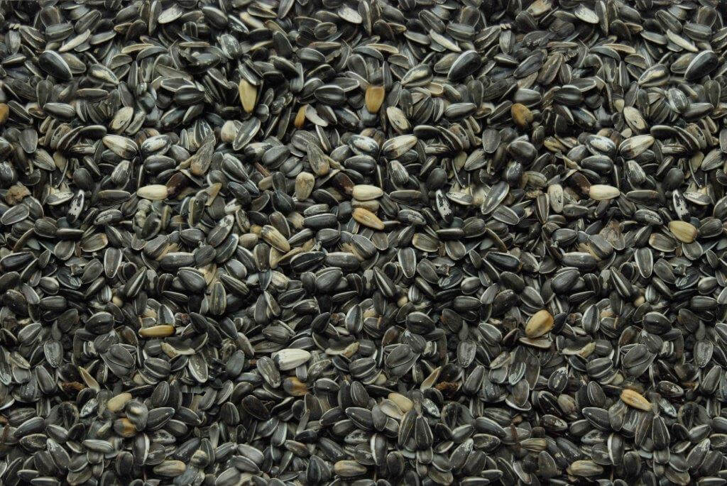 415 Stripe Sunflower Seed