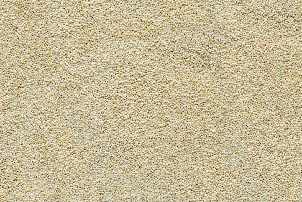 417 White Millet Seed