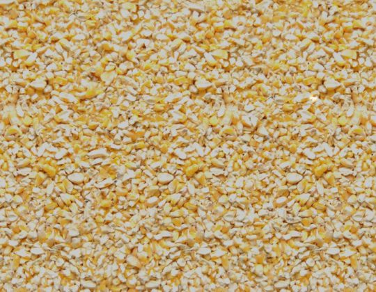 419 Cracked Corn Seed