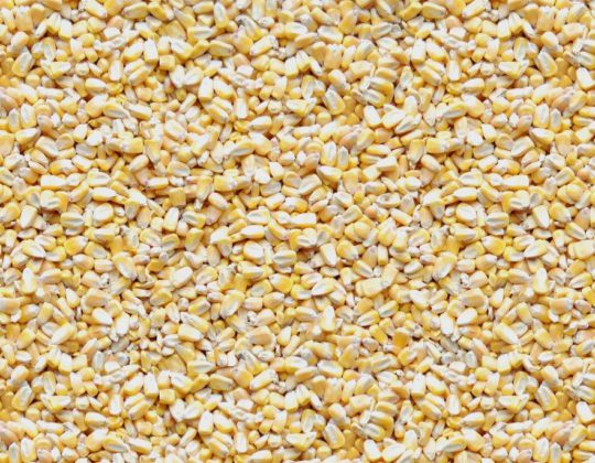 423 Shelled Corn Mix