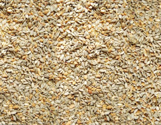 424 Patio Low-Millet Seed