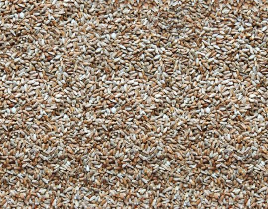 Nutra Saff Seed
