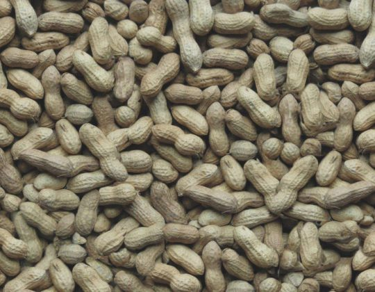 Whole Peanuts Shells